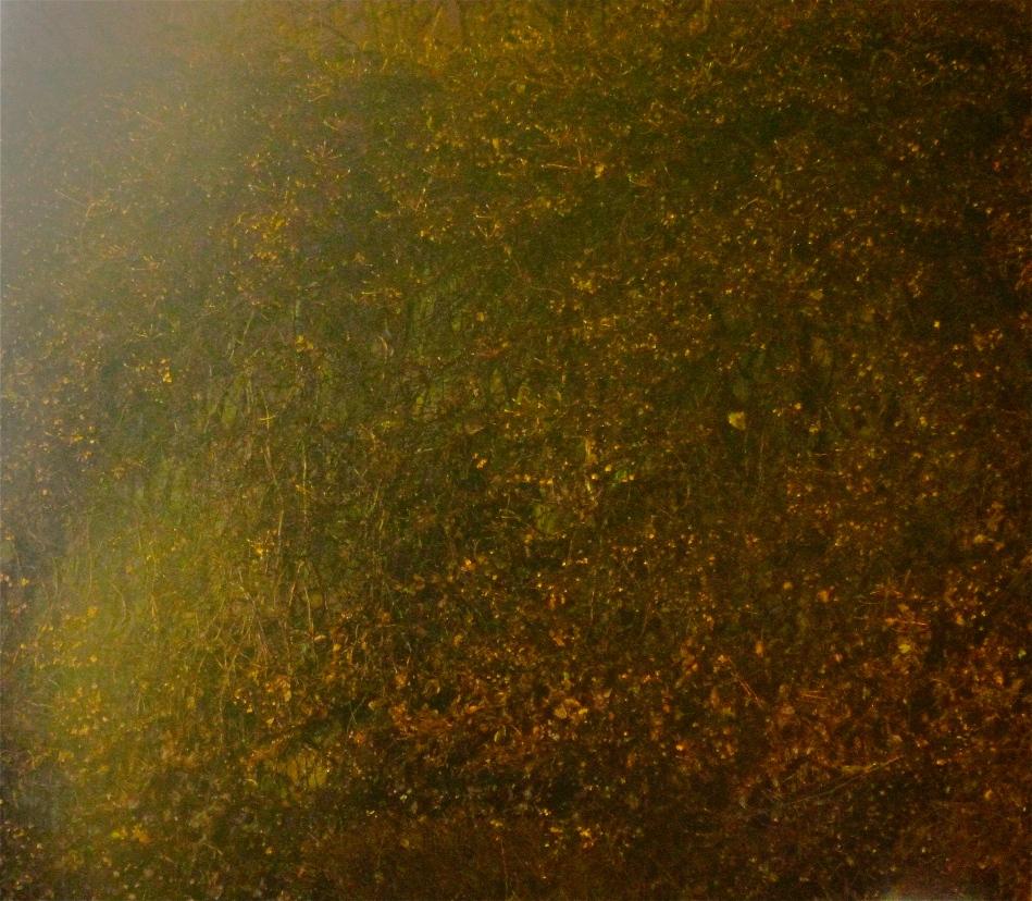 autumn tones-